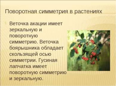 Поворотная симметрия в растениях Веточка акации имеет зеркальную и поворотную...