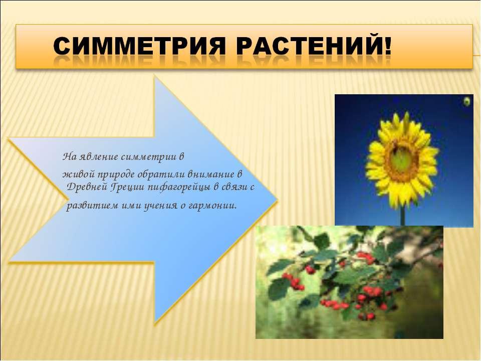 На явление симметрии в живой природе обратили внимание в Древней Греции пифаг...