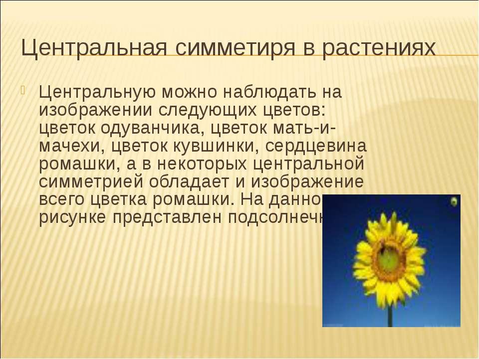 Центральная симметиря в растениях Центральную можно наблюдать на изображении ...