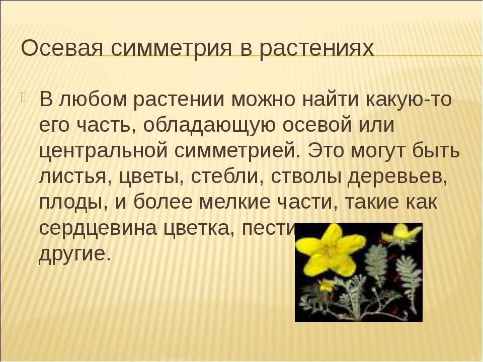 Осевая симметрия в растениях В любом растении можно найти какую-то его часть,...