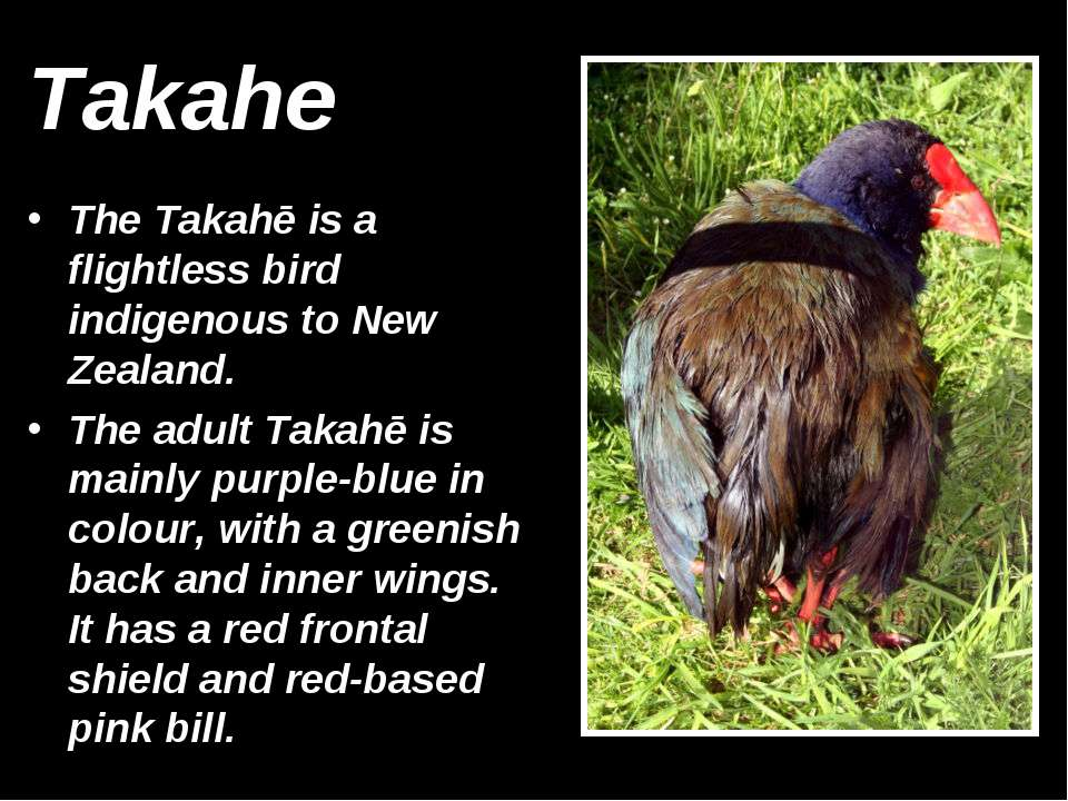 Takahe The Takahē is a flightless bird indigenous to New Zealand. The adult T...