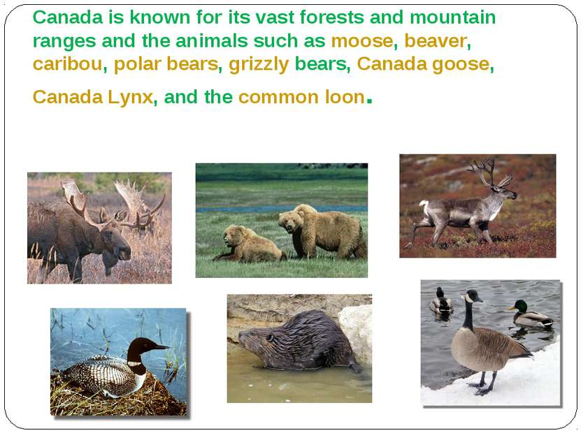 Animals Canada is known for its vast forests and mountain ranges and the anim...
