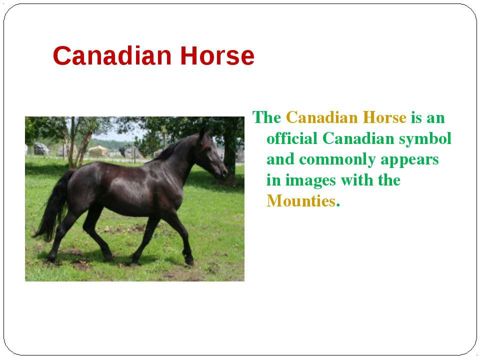 Canadian Horse The Canadian Horse is an official Canadian symbol and commonly...