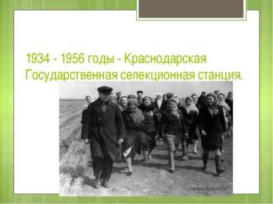 1934 - 1956 годы - Краснодарская Государственная селекционная станция.