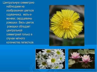 Центральную симметрию наблюдаем на изображении цветков одуванчика, мать-и-мач...