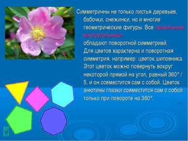 Симметричны не только листья деревьев, бабочки, снежинки, но и многие геометр...