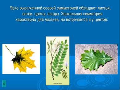 Ярко выраженной осевой симметрией обладают листья, ветви, цветы, плоды. Зерка...