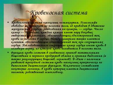 Кровеносная система насекомых незамкнутая. Гемолимфа свободно циркулирует по ...