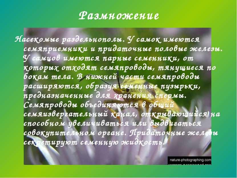 Размножение Насекомые раздельнополы. У самок имеются семяприемники и придаточ...