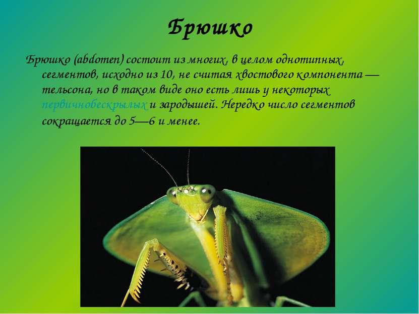 Брюшко Брюшко (abdomen) состоит из многих, в целом однотипных, сегментов, исх...