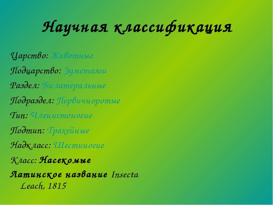 Научная классификация Царство: Животные Подцарство: Эуметазои Раздел: Билатер...