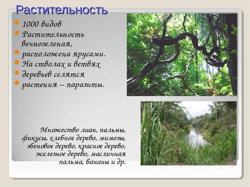 Растительность 1000 видов Растительность вечнозеленая, расположена ярусами. Н...
