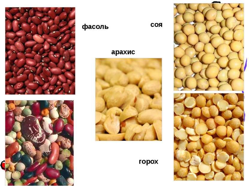 фасоль соя арахис горох