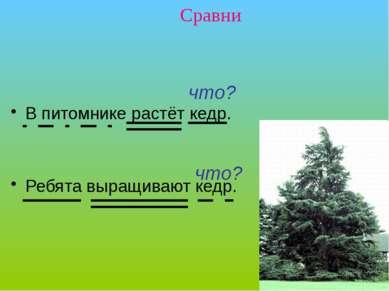 В питомнике растёт кедр. Ребята выращивают кедр. Сравни что? что? Упражнение ...