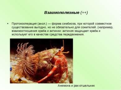 Взаимополезные (++) Протокооперация(англ.) — форма симбиоза, при которой сов...