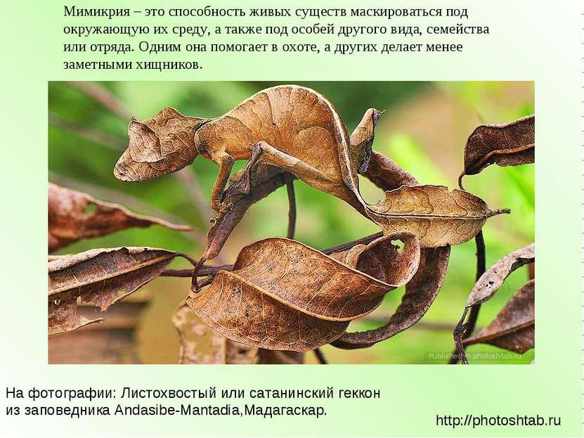 Мимикрия – это способность живых существ маскироваться под окружающую их сред...