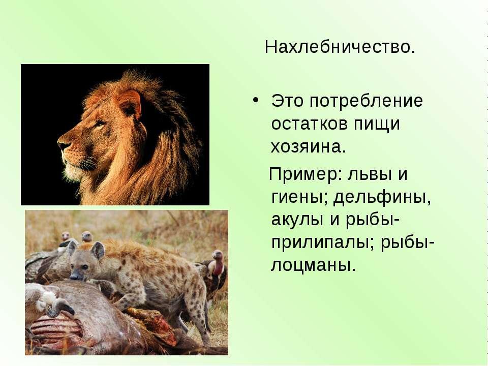 Нахлебничество. Это потребление остатков пищи хозяина. Пример: львы и гиены; ...