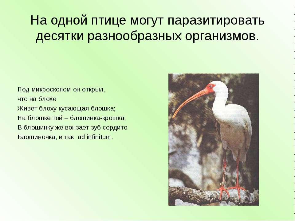 На одной птице могут паразитировать десятки разнообразных организмов. Под мик...