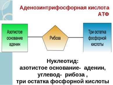 Аденозинтрифосфорная кислота АТФ Нуклеотид: азотистое основание- аденин, угле...