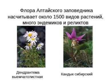 Флора Алтайского заповедника насчитывает около 1500 видов растений, много энд...