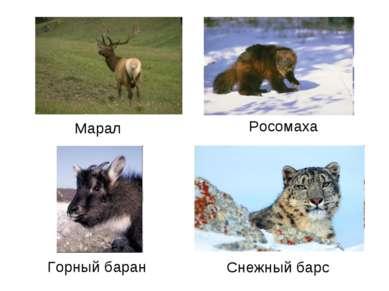 Марал Росомаха Горный баран Снежный барс