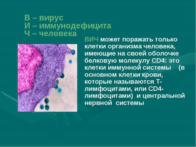 ВИЧ может поражать только клетки организма человека, имеющие на своей оболочк...
