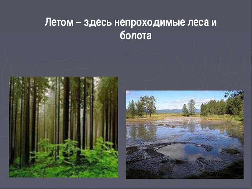 Летом – здесь непроходимые леса и болота