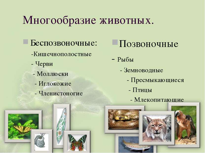 Многообразие животных. Беспозвоночные: -Кишечнополостные - Черви - Моллюски -...