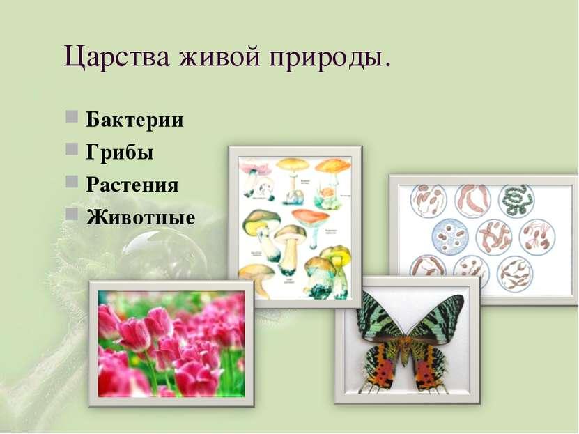 Царства живой природы. Бактерии Грибы Растения Животные