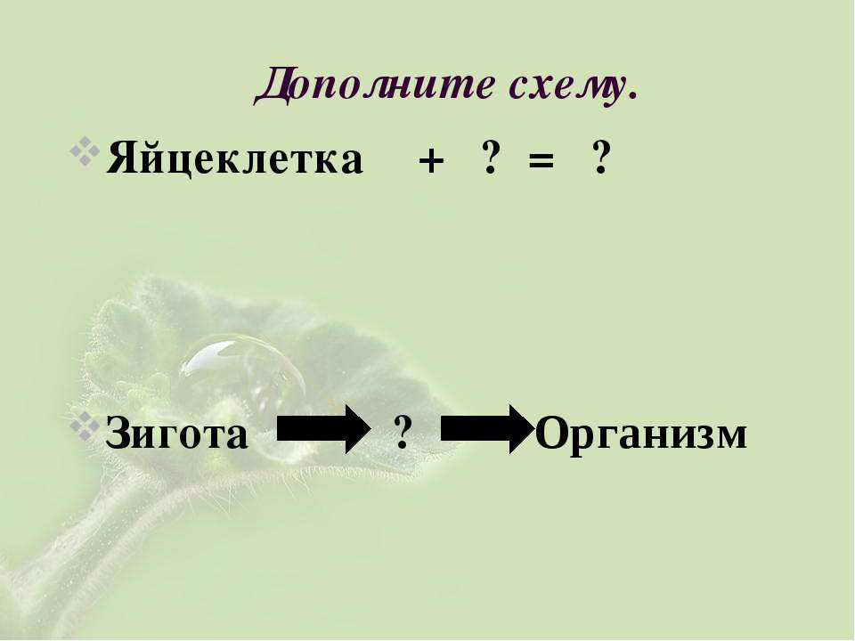 Дополните схему. Яйцеклетка + ? = ? Зигота ? Организм