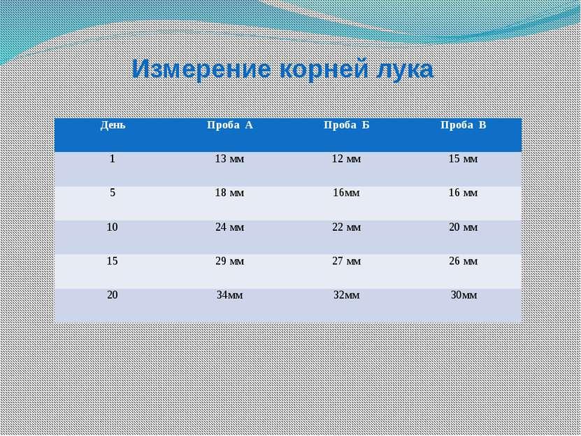 Измерение корней лука День Проба А Проба Б Проба В 1 13 мм 12 мм 15 мм 5 18 м...