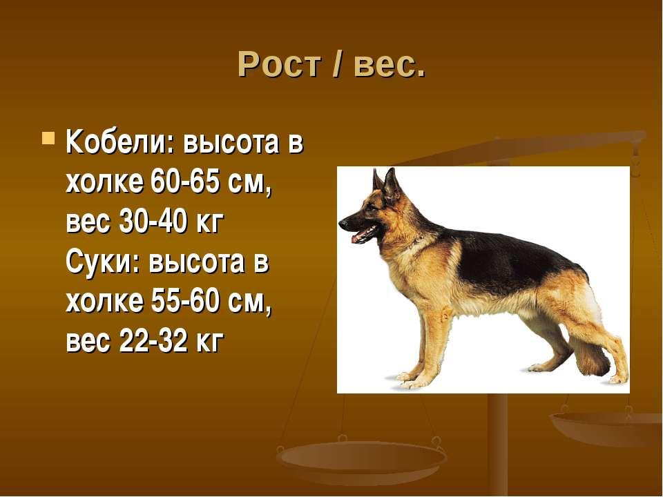 Рост / вес. Кобели: высота в холке 60-65 см, вес 30-40 кг Суки: высота в холк...