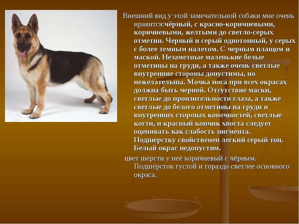 Внешний вид у этой замечательной собаки мне очень нравится:чёрный, с красно-к...