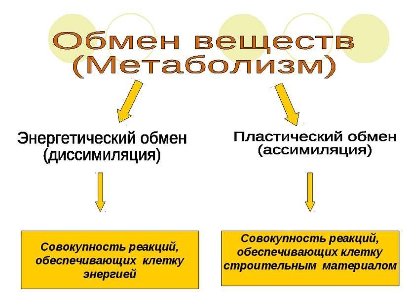 Совокупность реакций, обеспечивающих клетку энергией Совокупность реакций, об...
