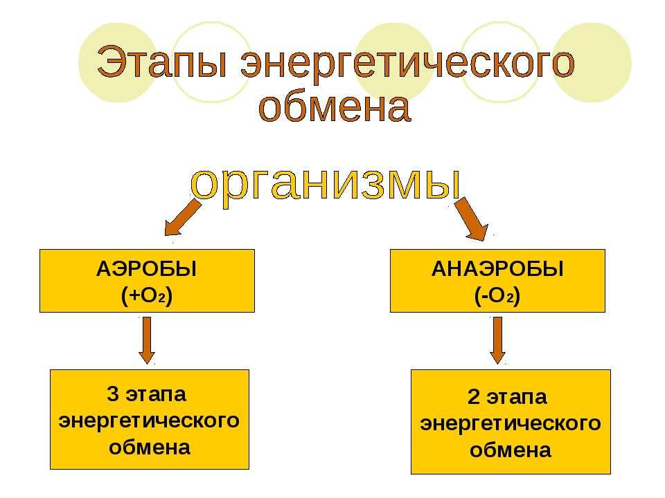 АЭРОБЫ (+О2) АНАЭРОБЫ (-О2) 3 этапа энергетического обмена 2 этапа энергетиче...