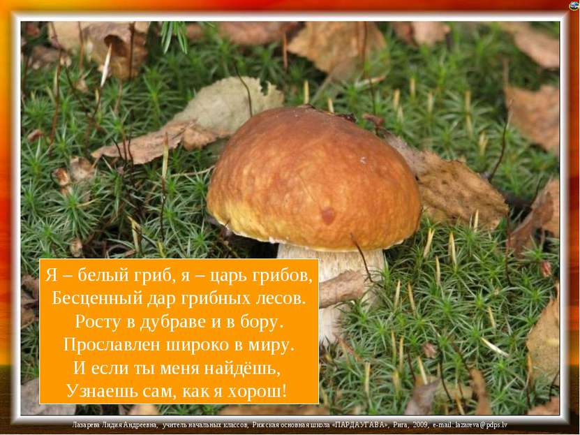 Я – белый гриб, я – царь грибов, Бесценный дар грибных лесов. Росту в дубраве...