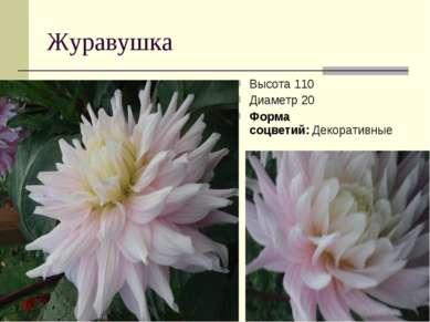 Журавушка Высота 110 Диаметр 20 Форма соцветий:Декоративные