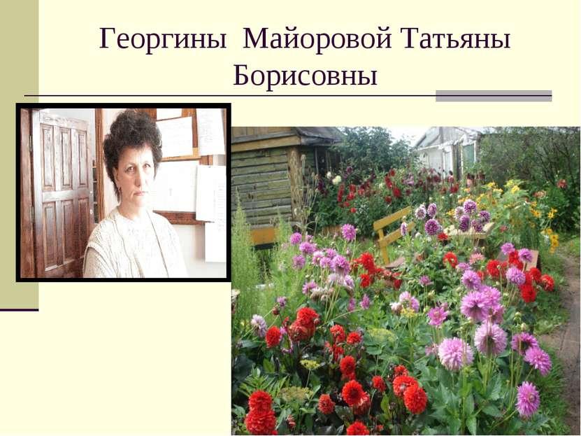Георгины Майоровой Татьяны Борисовны