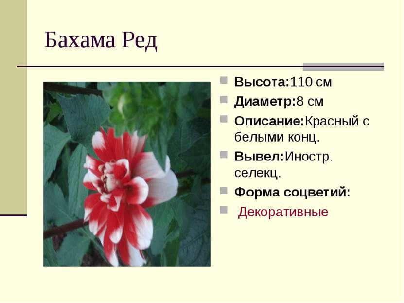 Бахама Ред Высота:110 см Диаметр:8 см Описание:Красный с белыми конц. Вывел:И...