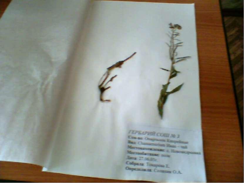 Коллекция гербарных образцов