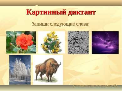 Картинный диктант Запиши следующие слова: Роза, мимоза, узор, гроза, мороз, зубр