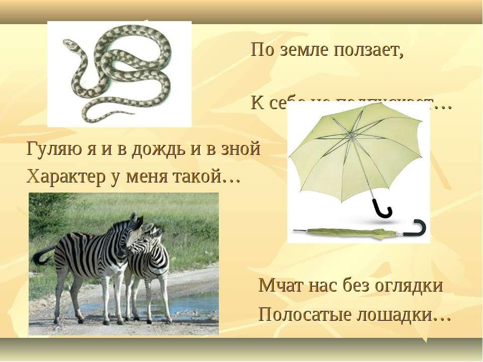 Мчат нас без оглядки Полосатые лошадки… Гуляю я и в дождь и в зной Характер у...