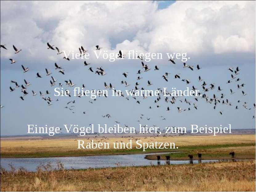 Viele Vögel fliegen weg. Sie fliegen in warme Länder. Einige Vögel bleiben hi...