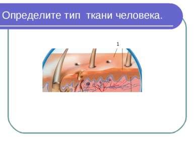 Определите тип ткани человека. 1