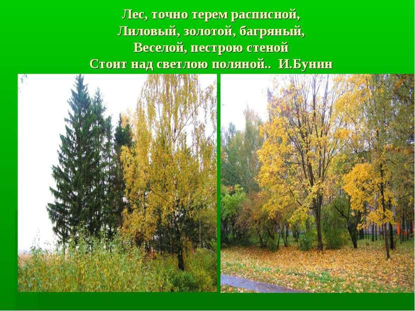 Лес, точно терем расписной, Лиловый, золотой, багряный, Веселой, пестрою стен...