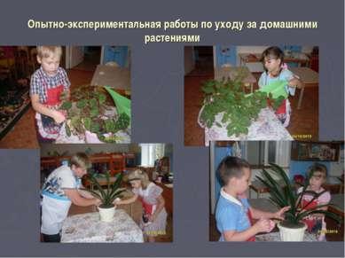 Опытно-экспериментальная работы по уходу за домашними растениями