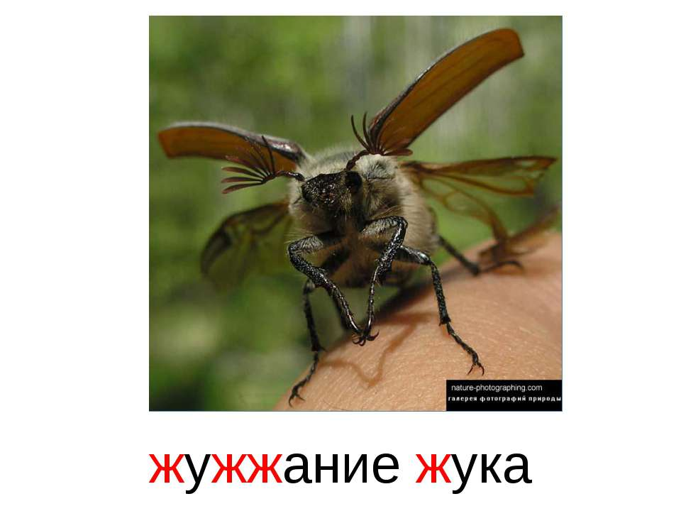 жужжание жука