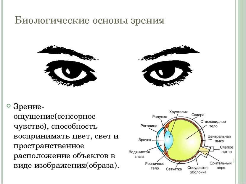 Биологические основы зрения Зрение- ощущение(сенсорное чувство), способность ...