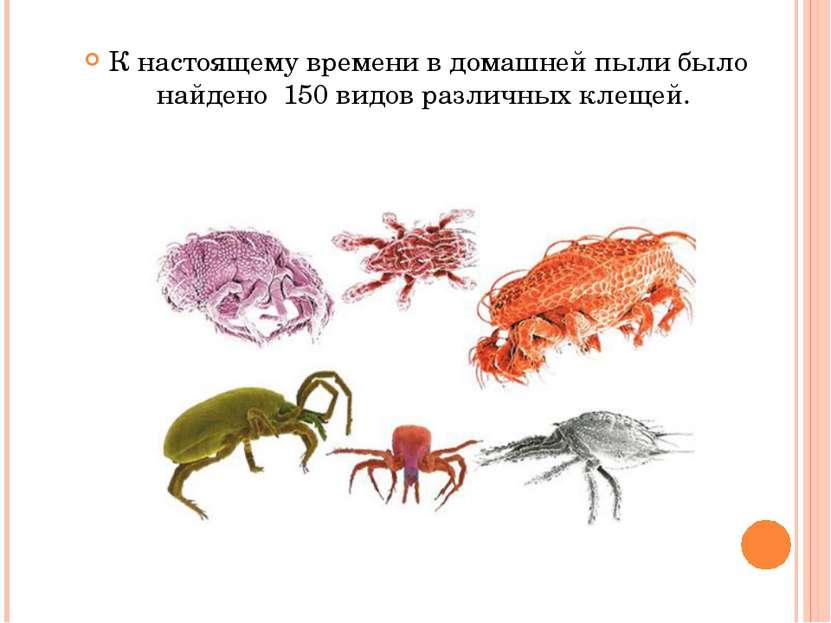 К настоящему времени в домашней пыли было найдено 150 видов различных клещей.