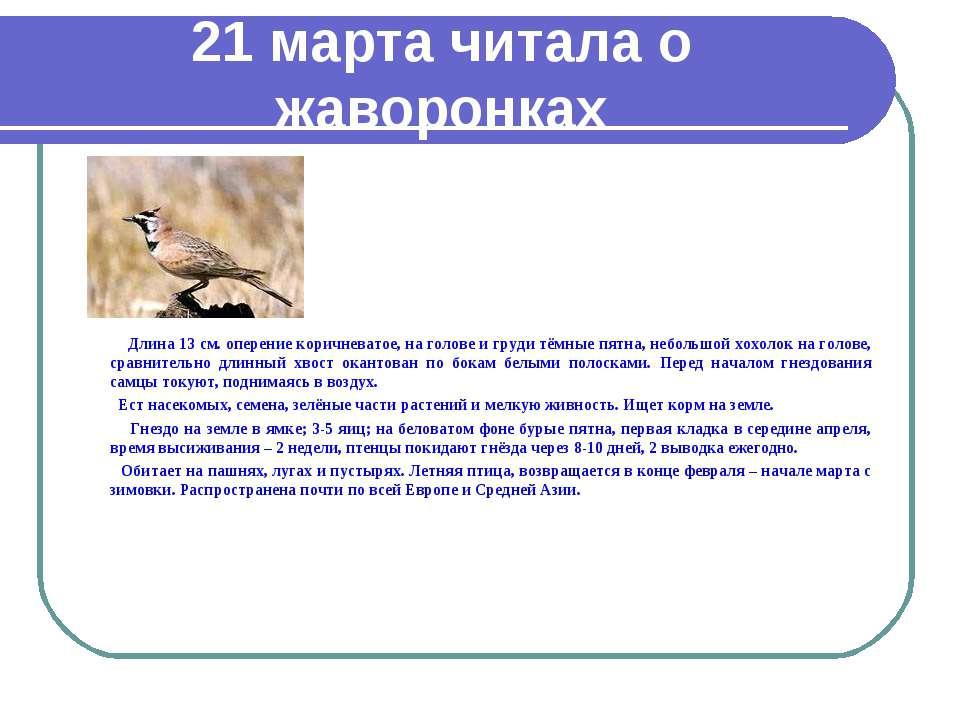 21 марта читала о жаворонках Длина 13 см. оперение коричневатое, на голове и ...